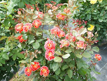 botanen05302010-4.jpg